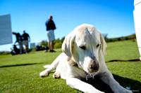 10.06 Sporting Chance Golf Tournament (DFW Lab Rescue)